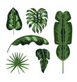set natural leaves plants style vector image vector image
