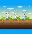 three rabbits cartoon in the carrot garden vector image