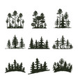 Tree outdoor travel black silhouette coniferous
