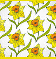 daffodil seamless patterns vector image vector image