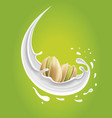 milk splash with pistachio nuts vector image vector image