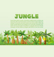rainforest palm trees with other tropical vector image vector image