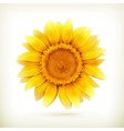 sunflower high quality vector image vector image