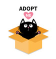 adopt me dont buy cat inside opened cardboard vector image vector image