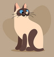 cartoon bicolor kitten vector image
