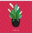 flat of indoor homeplant calla vector image vector image