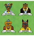 Hipster animals set dog Large group of dog breeds vector image vector image