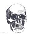 Vintage ethnic hand drawn human skull vector image vector image