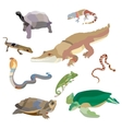 Reptiles and amphibians decorative set of cobra vector image