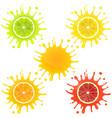 citrus fruit in splashes juice vector image