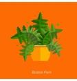 flat of indoor homeplant fern vector image vector image