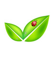 green leaves symbol with ladybird vector image
