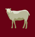 in flat style sheep vector image vector image
