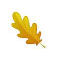 oak leaf autumn tree fall isolated leaves foliage vector image vector image