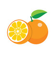 oranges on white background vector image vector image