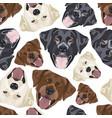 seamless pattern labrador mix vector image vector image