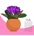 viola plant in pot banner template vector image vector image