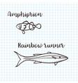 clownfish anemonefish ocellaris clownfish vector image vector image