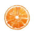 orange slice vector image