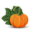 pumpkins with leaves isolated on white background vector image vector image