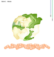 White Cauliflower with Vitamin C and Minerals vector image vector image