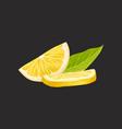 fresh sliced lemon fruit on a vector image