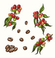 set of colored coffee vector image