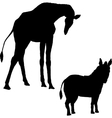 silhouettes of a giraffe and zebra vector image