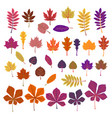 autumn leaves yellow foliage set season of vector image vector image