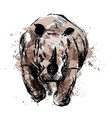 colored hand sketch of the running rhino vector image vector image