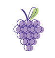 delicious grape fruit with vitamins and protein vector image vector image