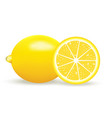 fresh lemon isolated on vector image vector image