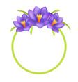 crocus purple flowers photo frame greeting design vector image
