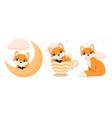 little fox set vector image