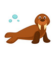 walrus baby with long fangs and pair of flippers vector image vector image