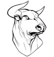 bull on white vector image vector image