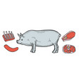 pork meat ham cuts vector image