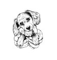 spaniel dog puppy in arms wall sticker vector image vector image