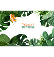 tropical background with frame from leaves vector image vector image