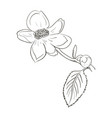 beautiful flower draw vector image