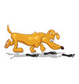 cartoon of a funny bloodhound dog with fixed look vector image