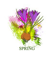 spring greeting card with crocus flower vector image vector image