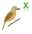 Alphabet letter X xenops children vector image