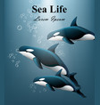 whales under water sea life beautiful vector image