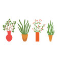 houseplant in vases flowers with flourishing vector image vector image