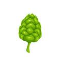 green hop cone symbol of beer festival vector image