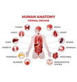 human internal organs man body anatomy medical vector image