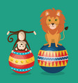 monkeys and lion circus show vector image