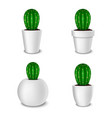 realistic decorative cactus plant in white flower vector image