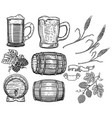 set of hand drawn beer design elements hop wheat vector image vector image
